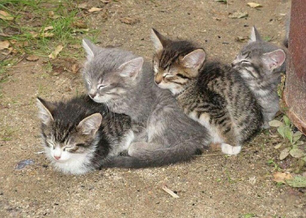 gattini terreno trenino