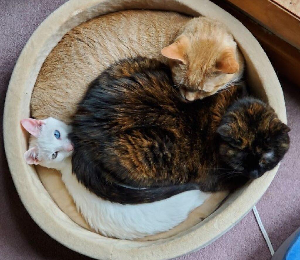 gatti dentro cuccia circolare