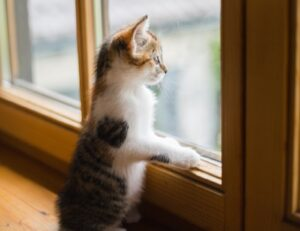 gatti che adorano stare affacciati finestre