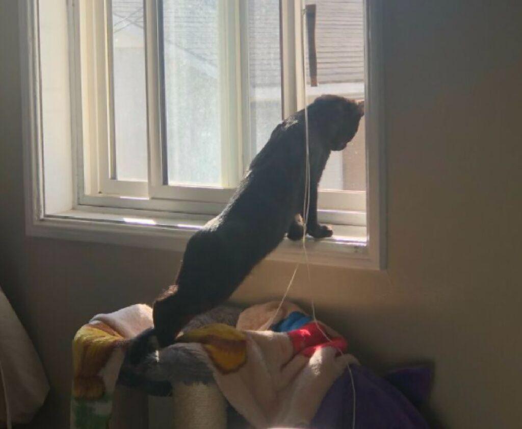 gatto nero si affaccia verso sotto