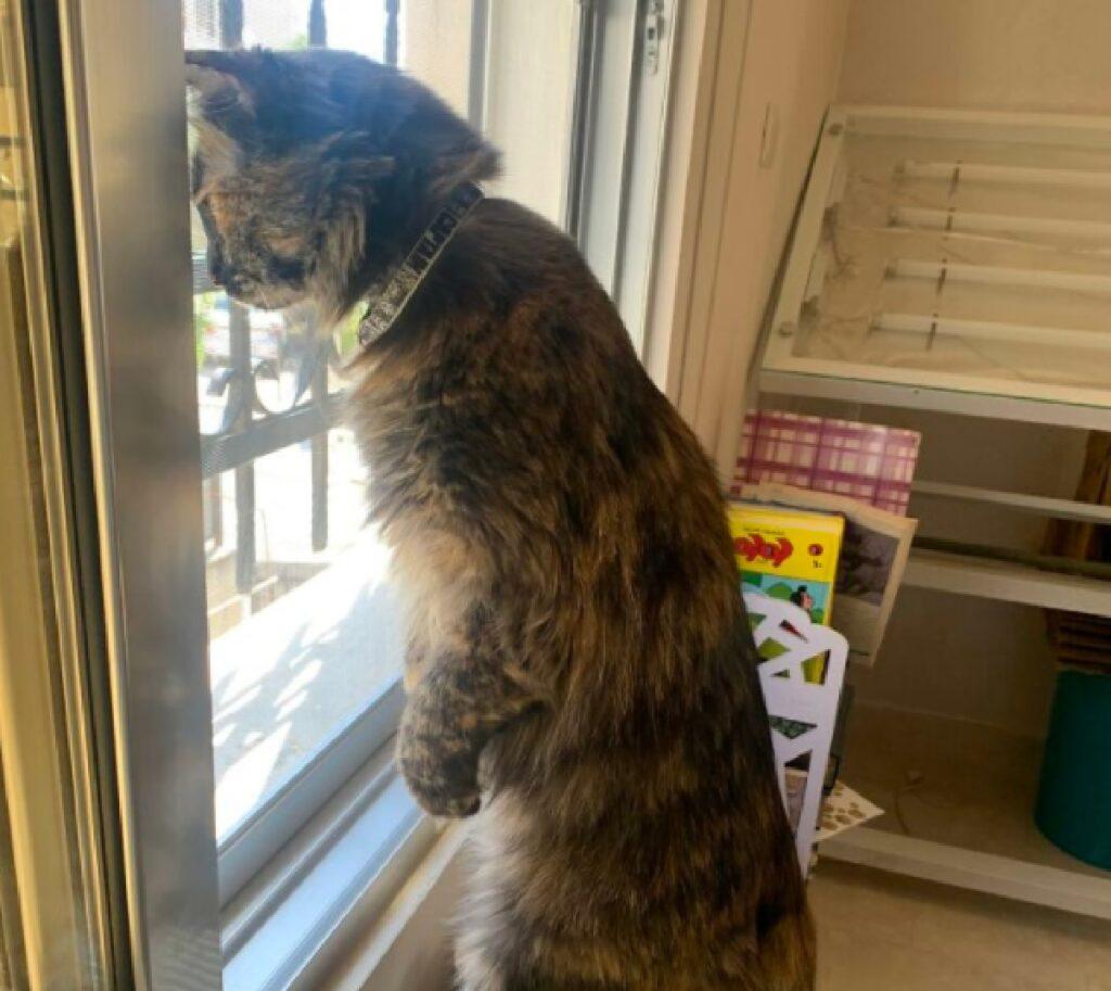 gatto vede cosa accade