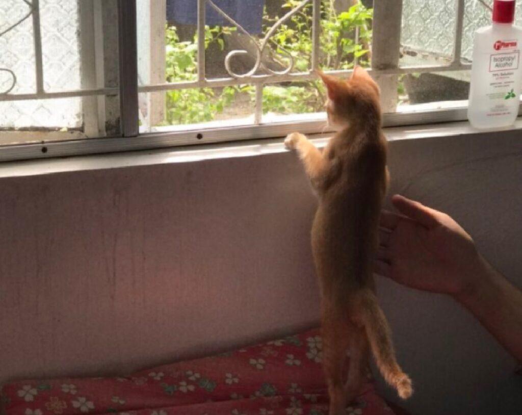 gattino rosso inizia subito