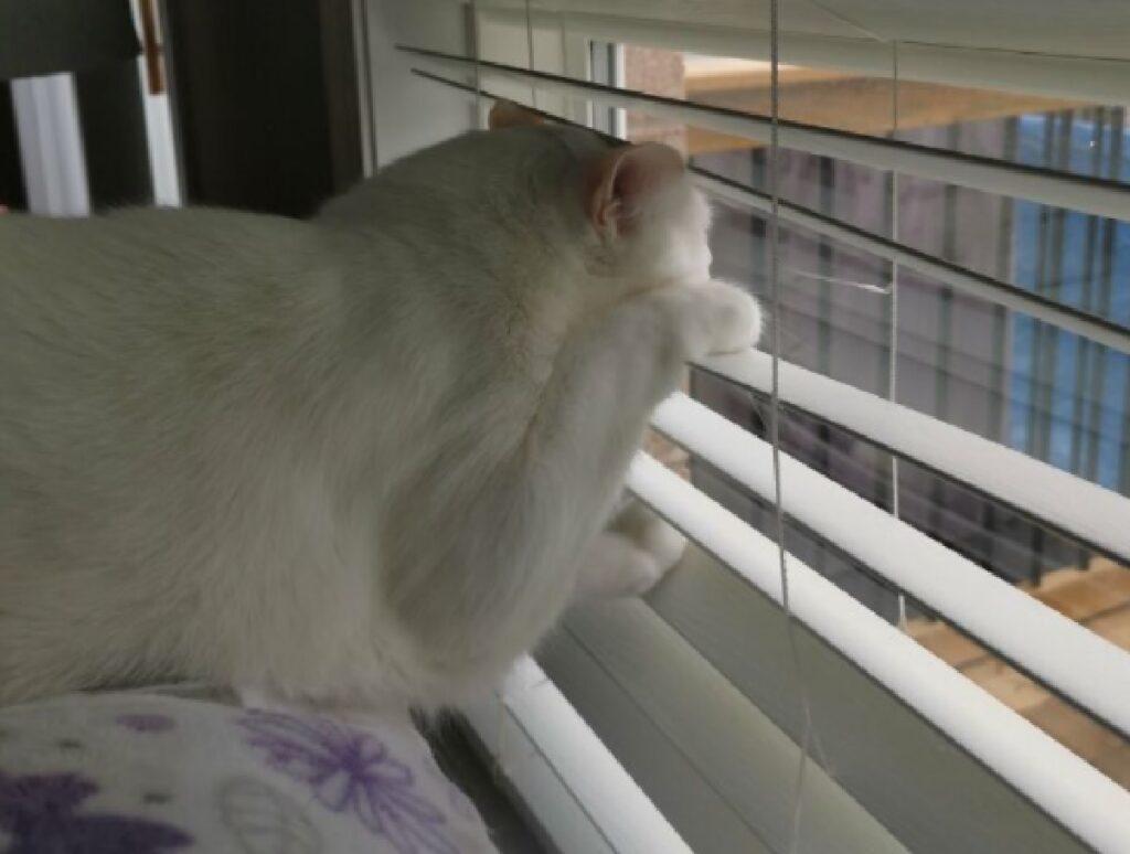 gatto rimane incastrato