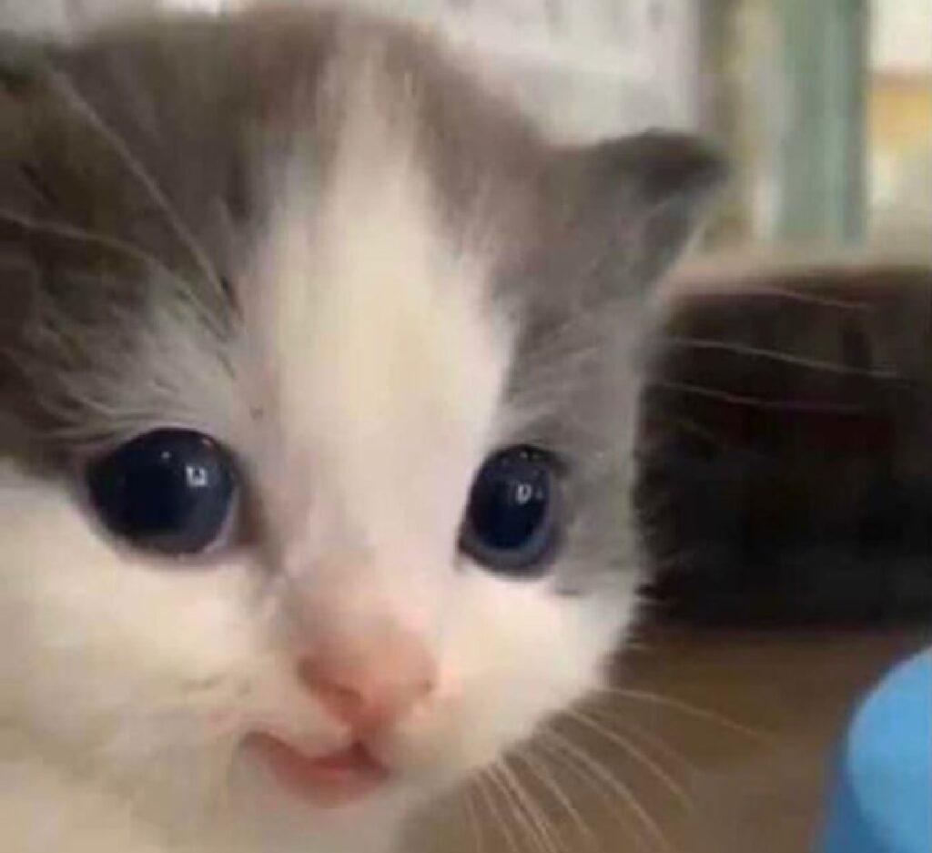 gattino sorriso genuino