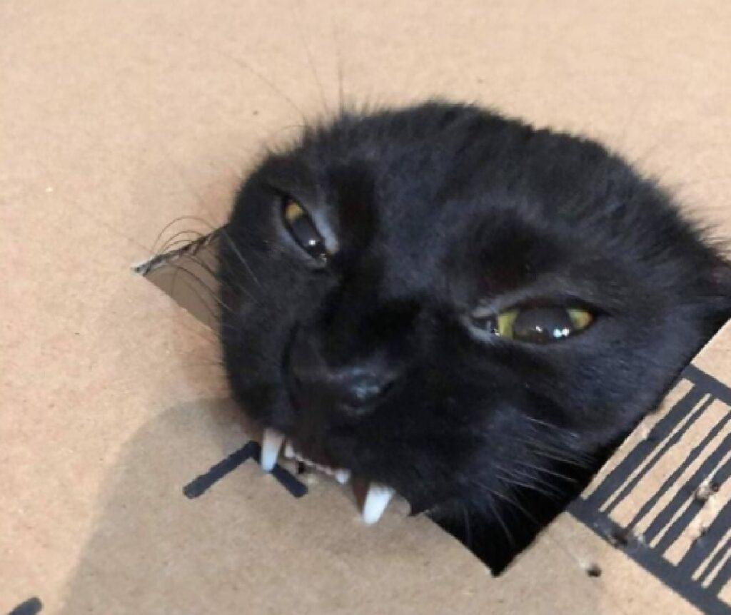 gatto nero tira fuori denti