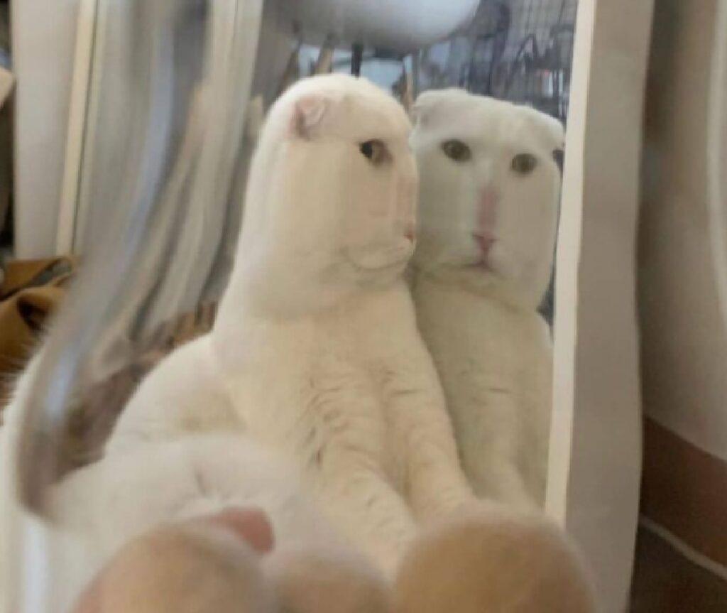 gatto bianco visto da altra prospettiva