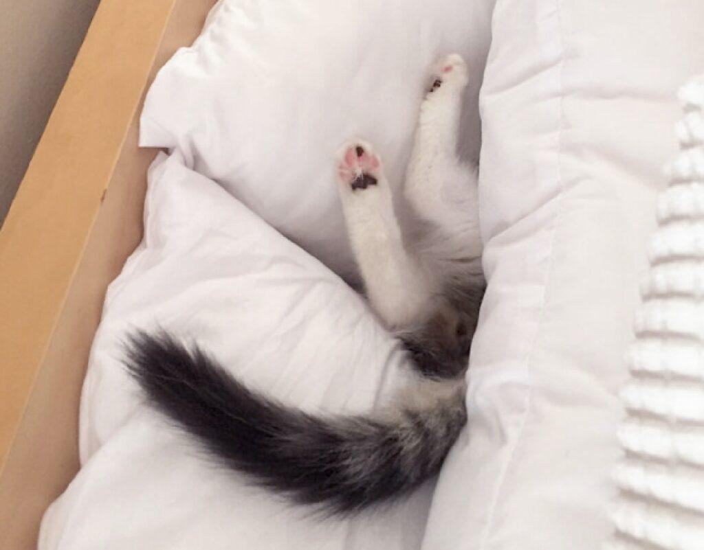 gatto risucchiato da coperte