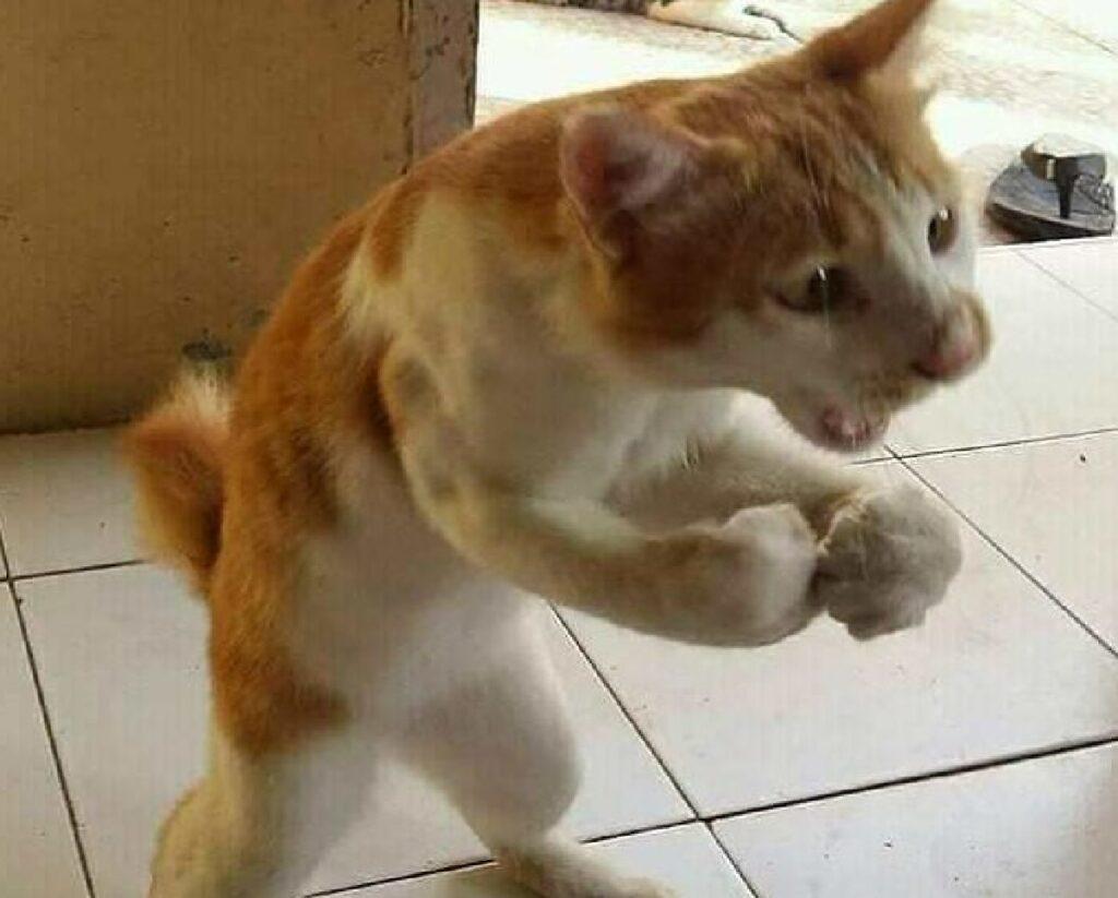 gatto rosso posizione strana