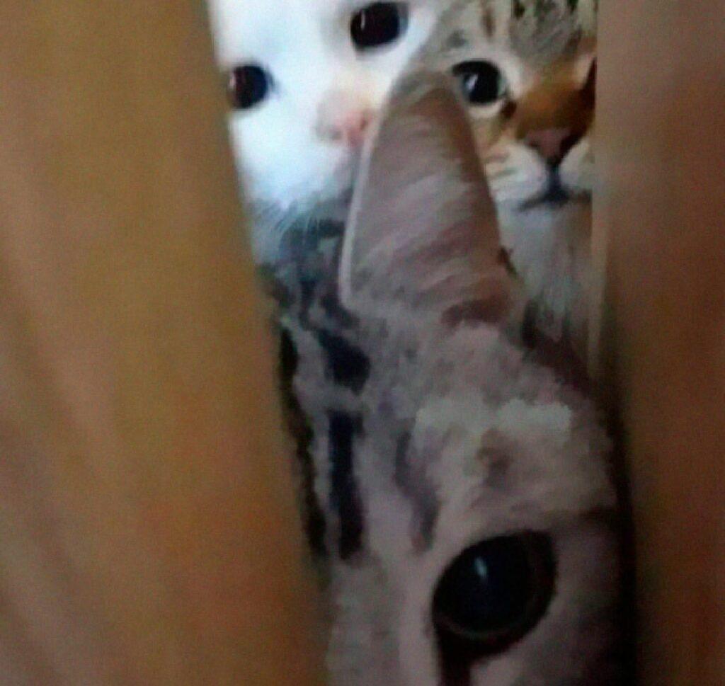 gatti si ammucchiano davanti porta