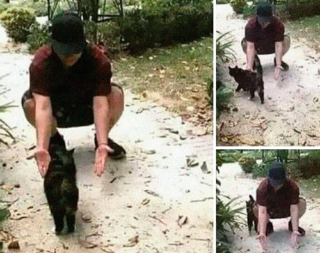 gatto nero passa attraverso uomo