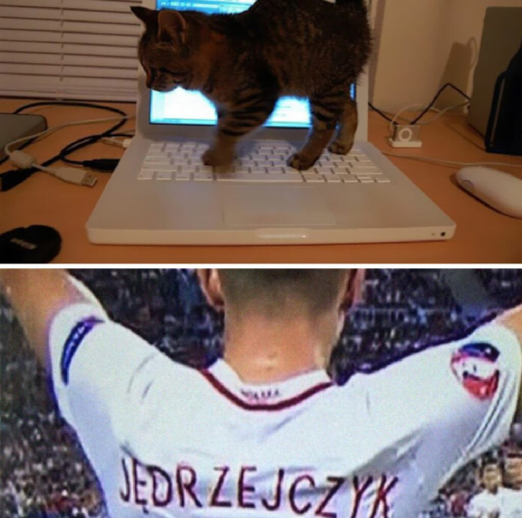 gatto passa sopra tastiera computer
