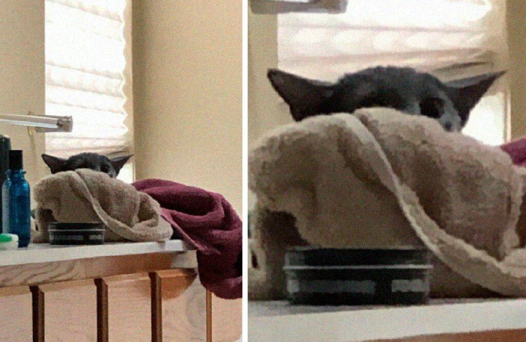 gatto identico baby yoda