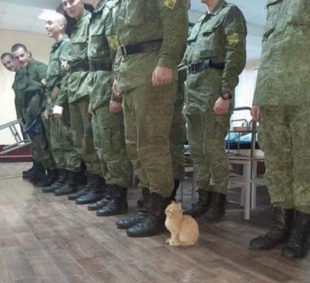 gatto insieme a forze armate