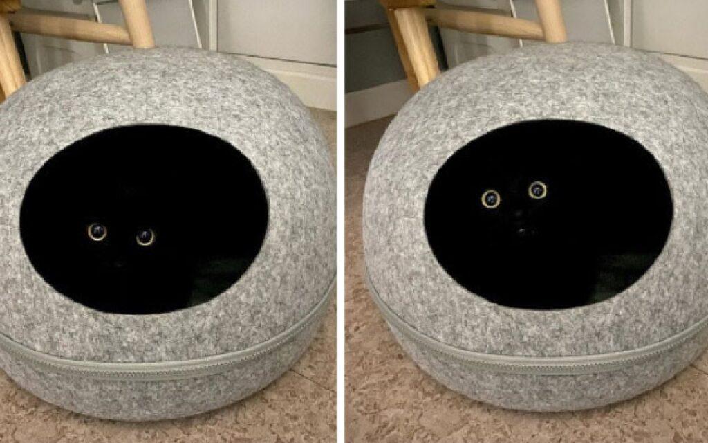 gatto nero dentro cuccetta