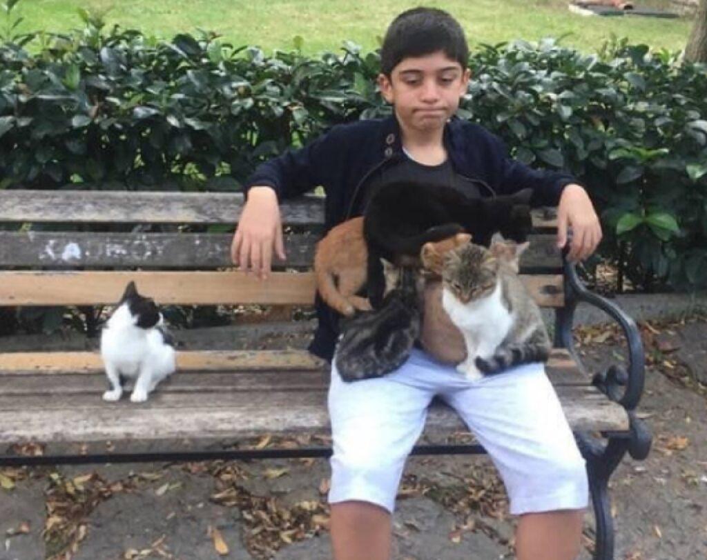 gatto non fanno sentire solo ragazzo