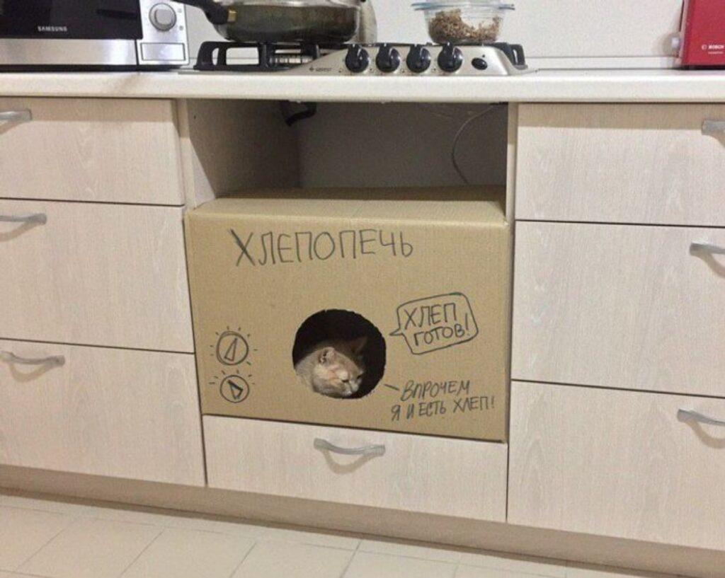 gatto scatola relax