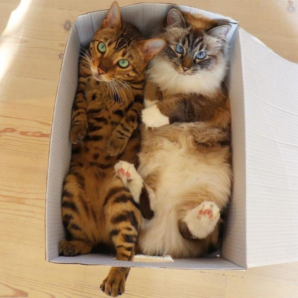 coppia felini inseparabili
