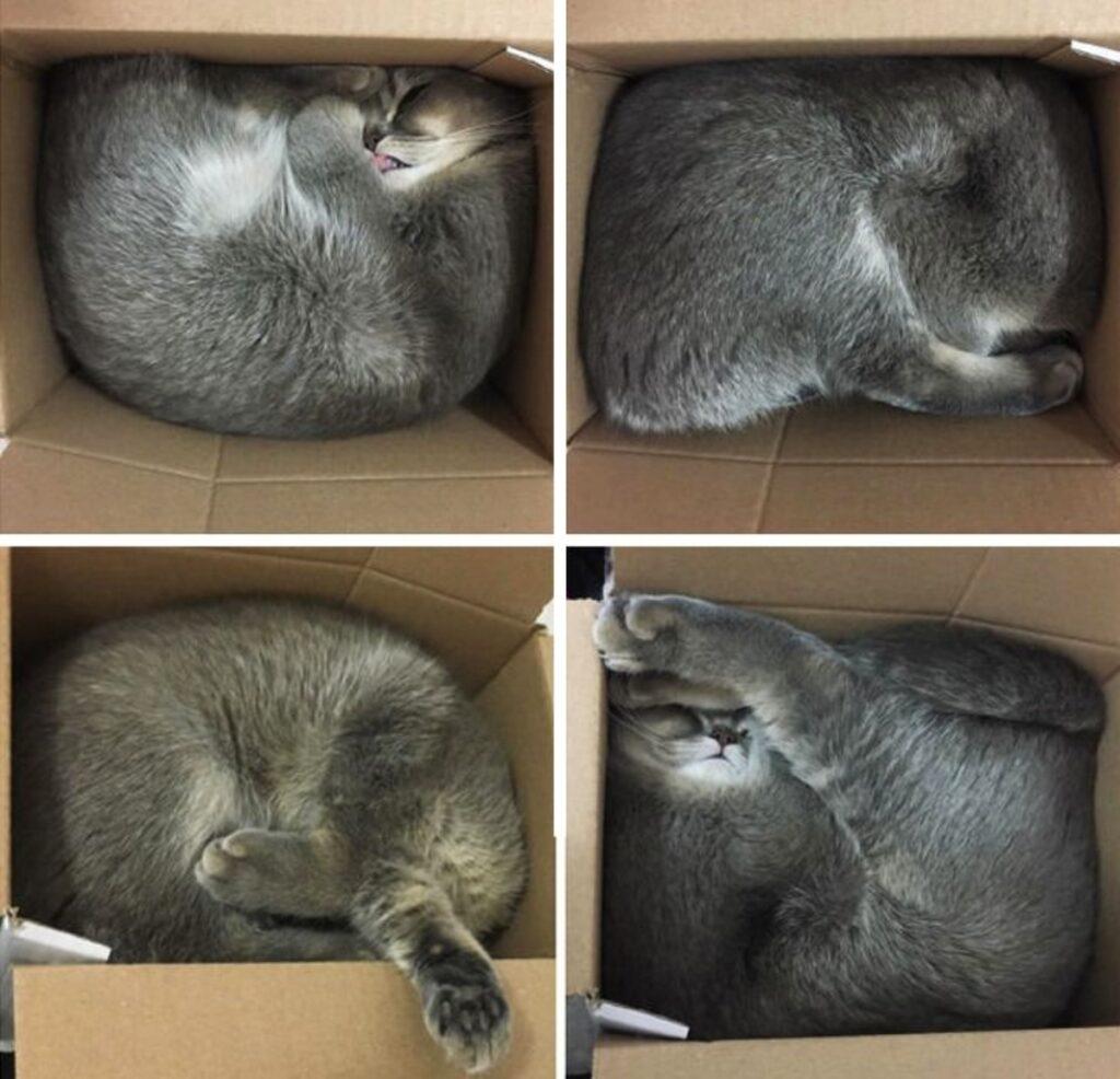 felino dorme scomodo