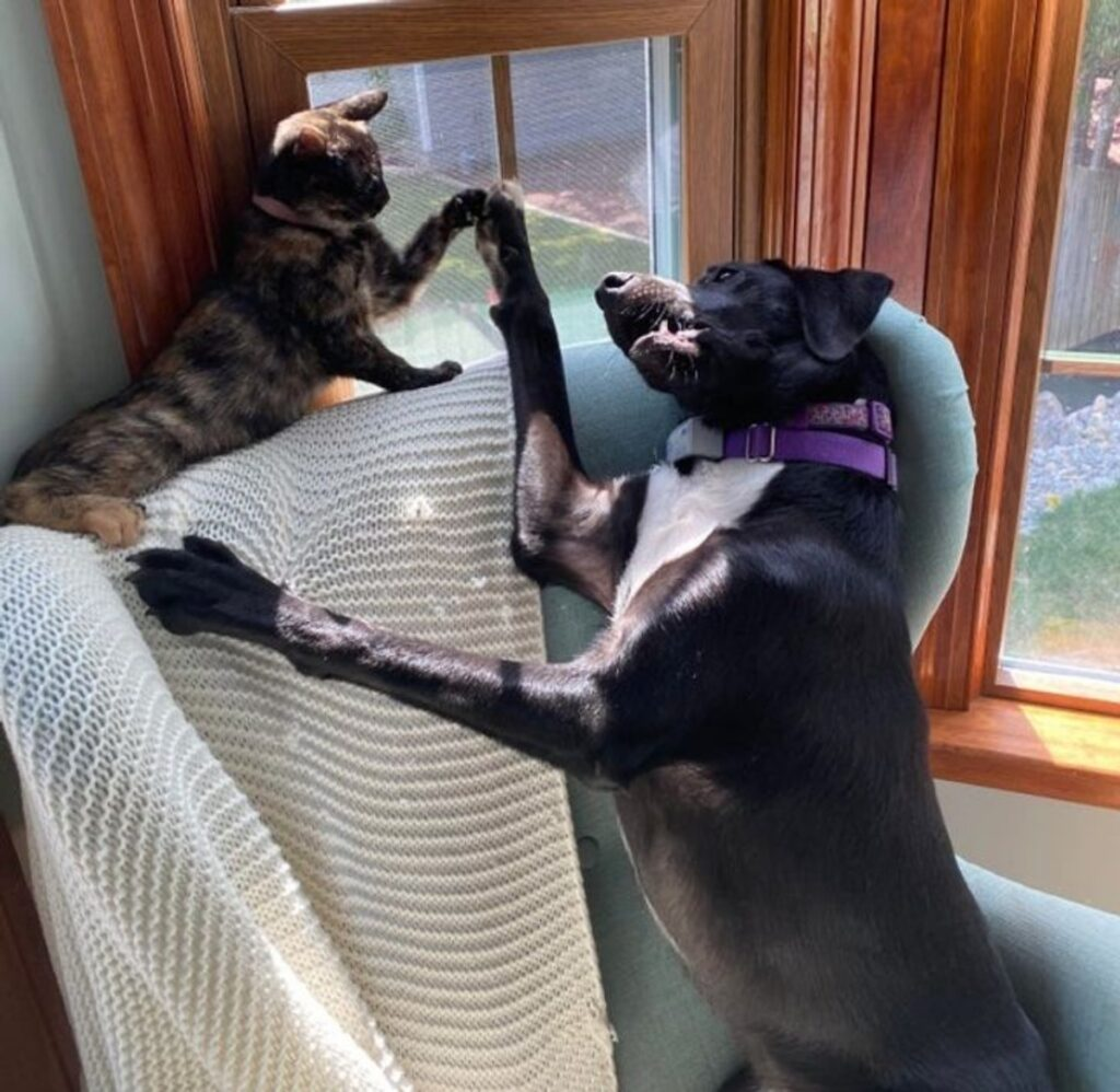 batti cinque gatto