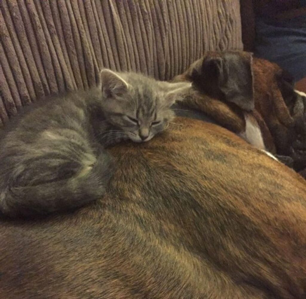 micio cane dormire