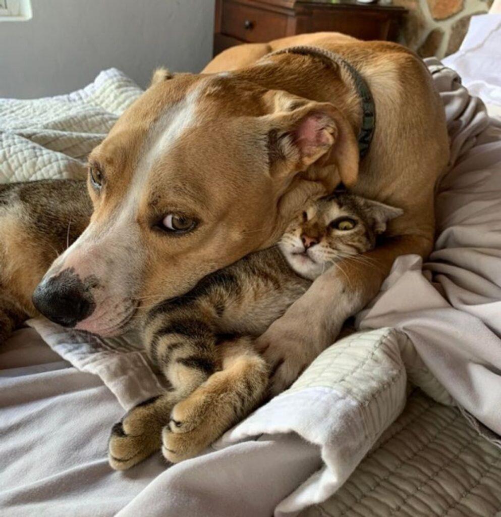 abbraccio cane gatto