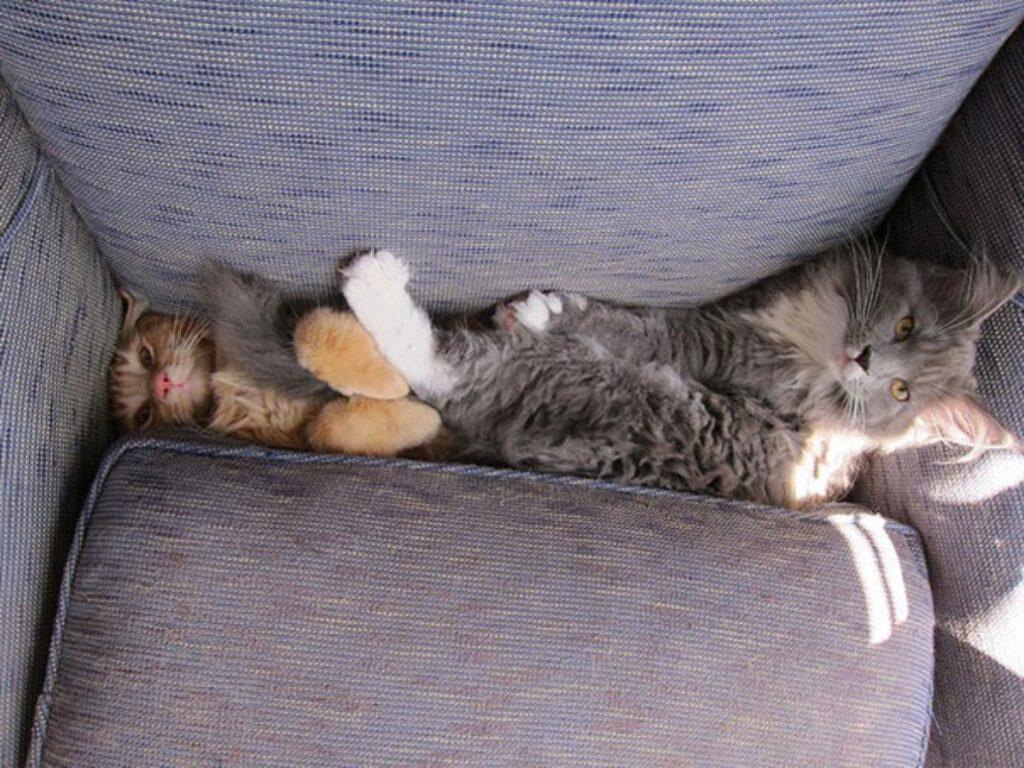 gatti simpatici divano
