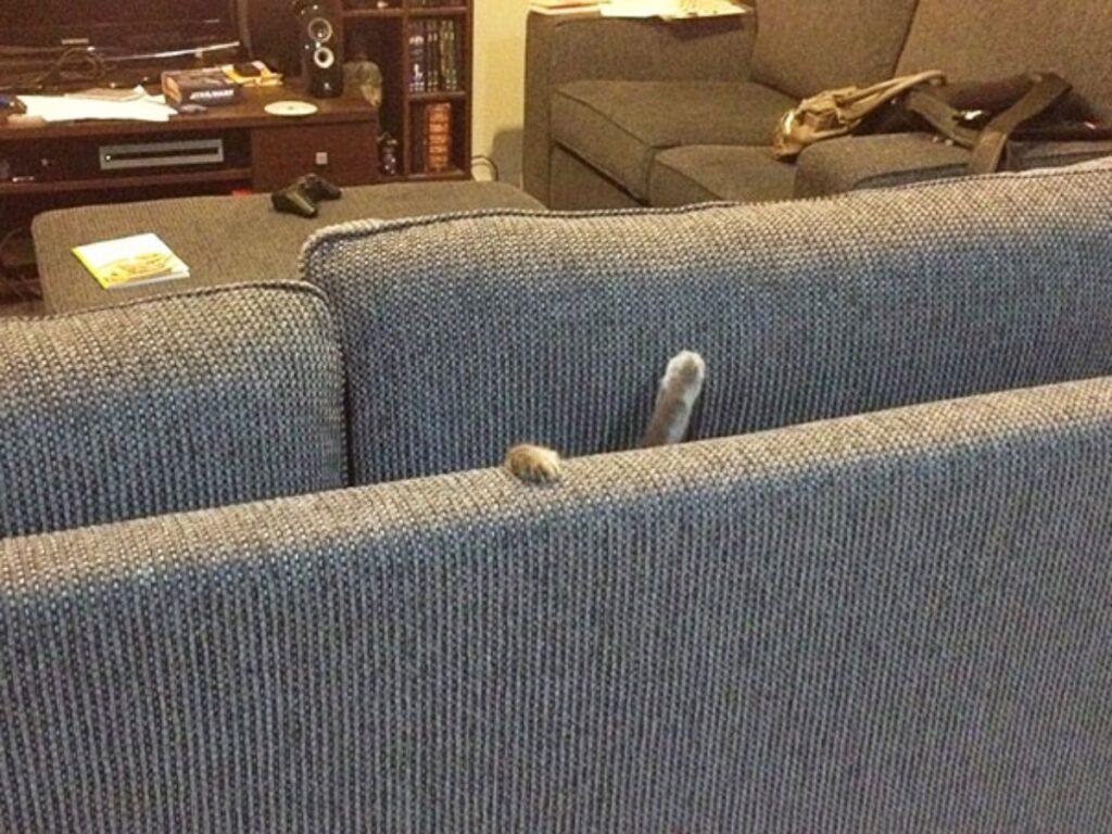 gatto zampette divano