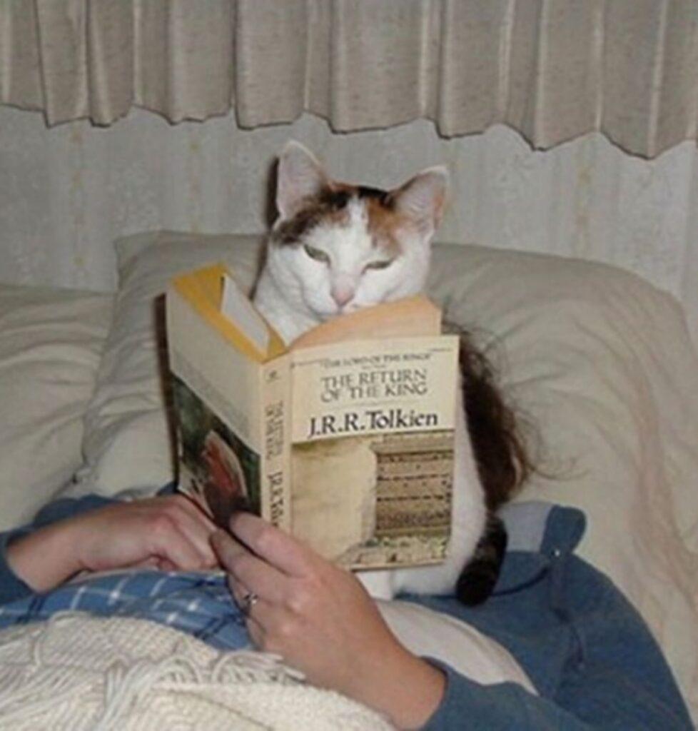 gatto libro leggere