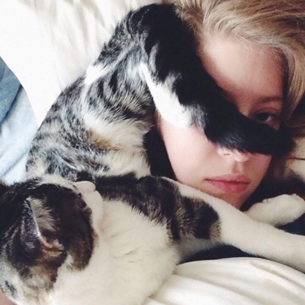 gatto coda faccia
