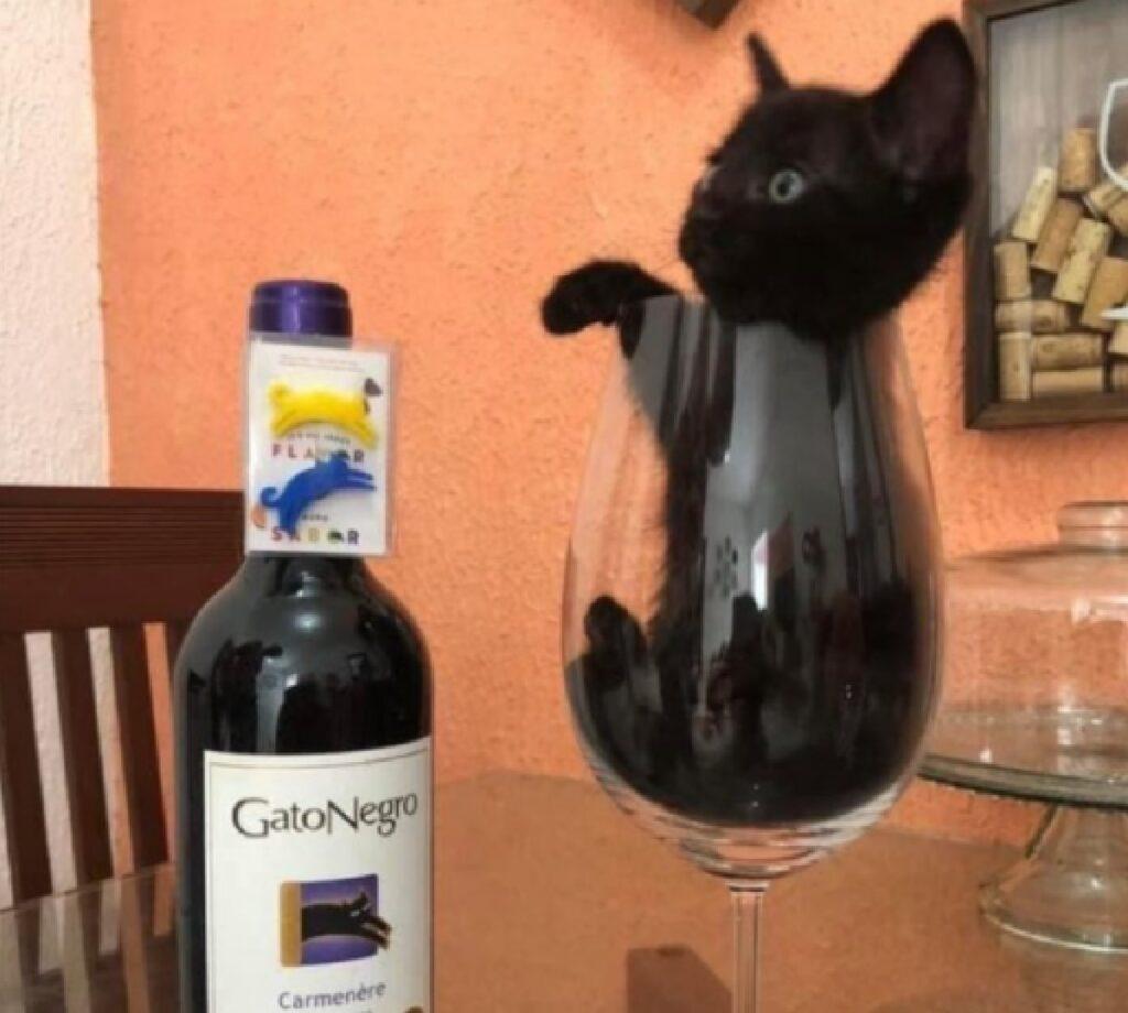 gatto dentro bicchiere di vino