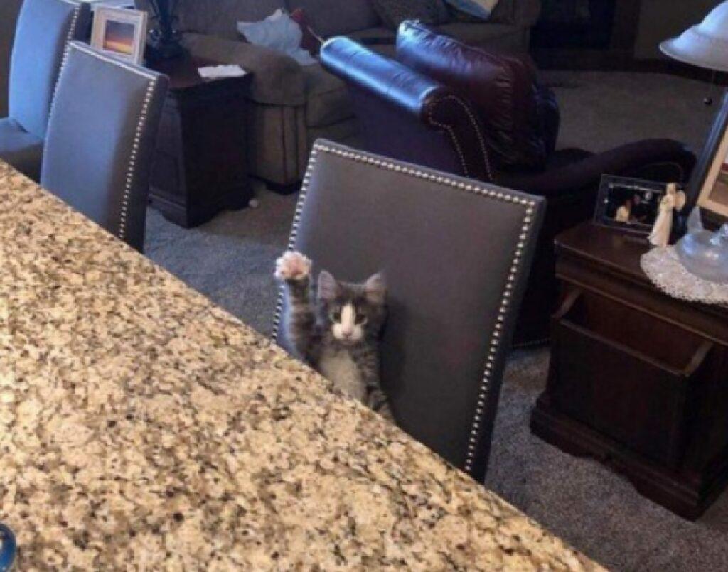 gattino a tavola per cena