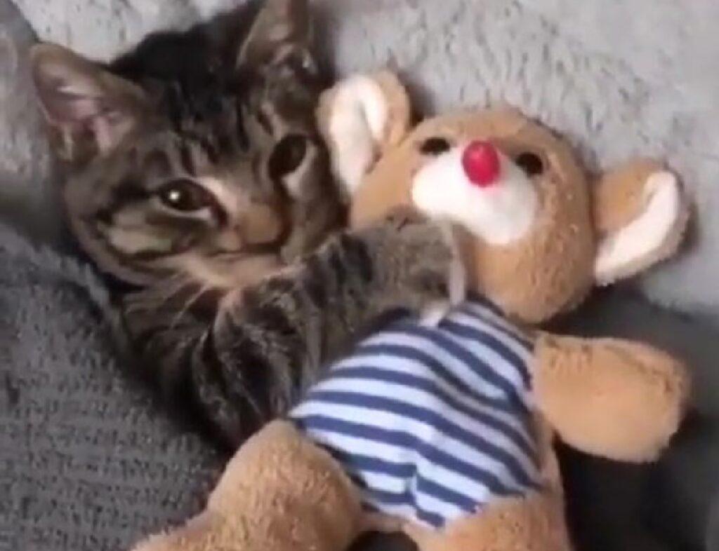gatto soriano con orsacchiotto