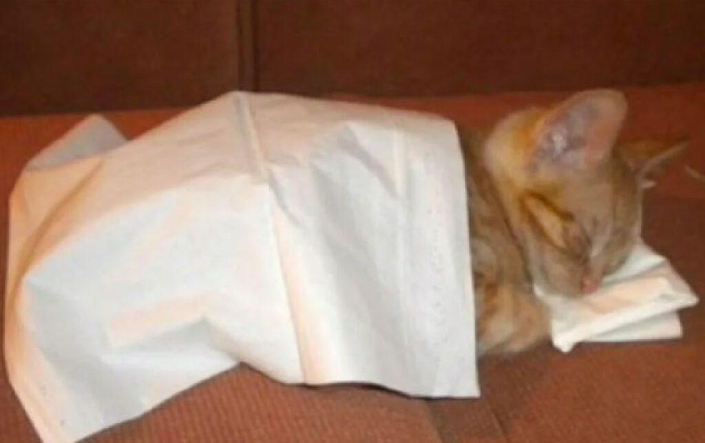 gatto lenzuolo per massaggi