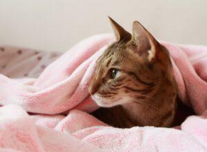 gatti che vogliono il riposino