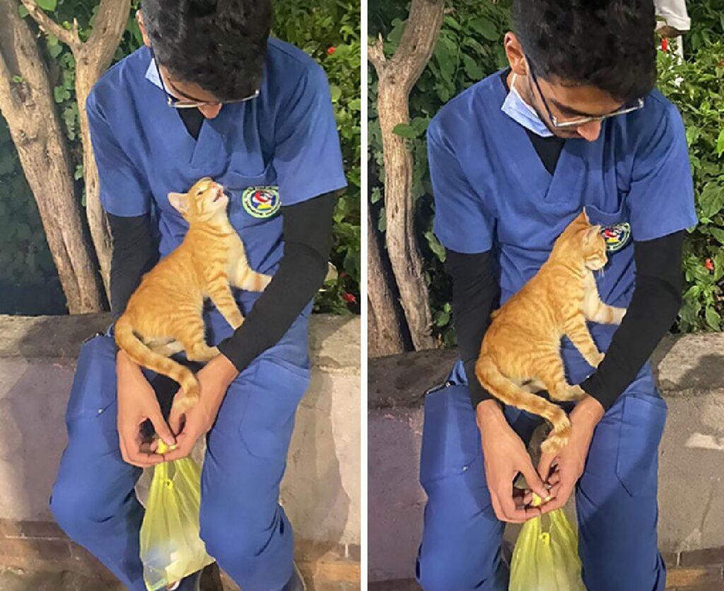 gattino rosso in grembo ragazzo