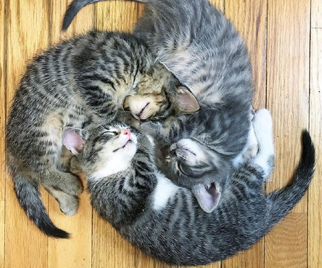 gatti trio per pisolino