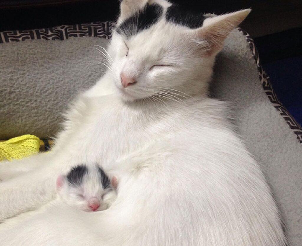 gatto bianco con cucciolo