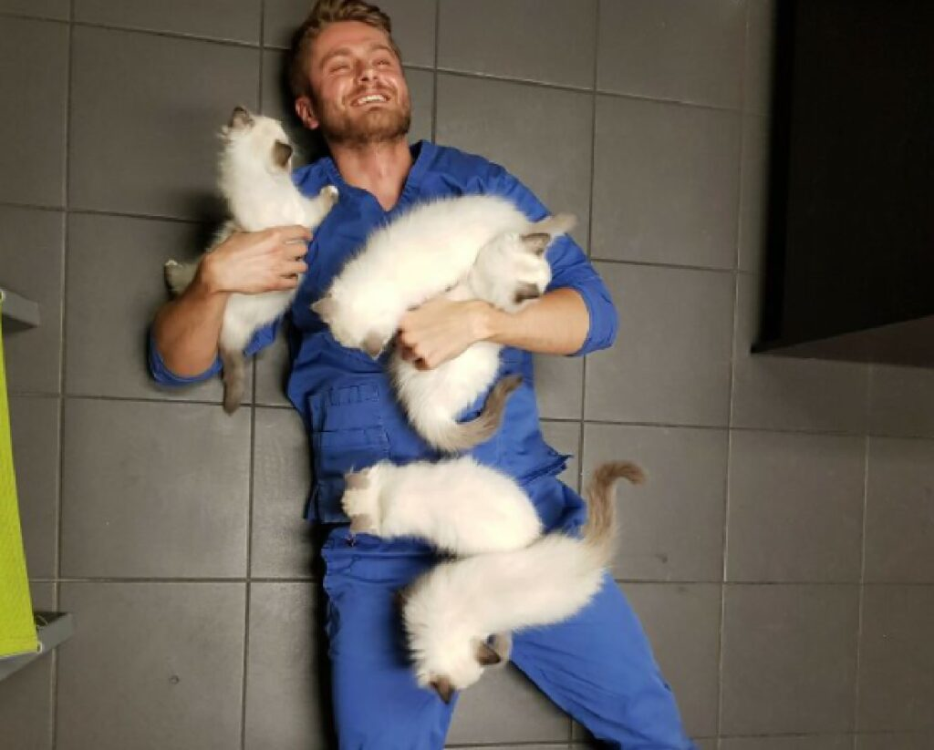 gatti bianchi assalgono uomo