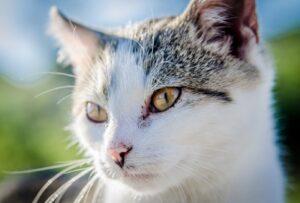 gatti che rendono la vita all'interno dei rifugi unica