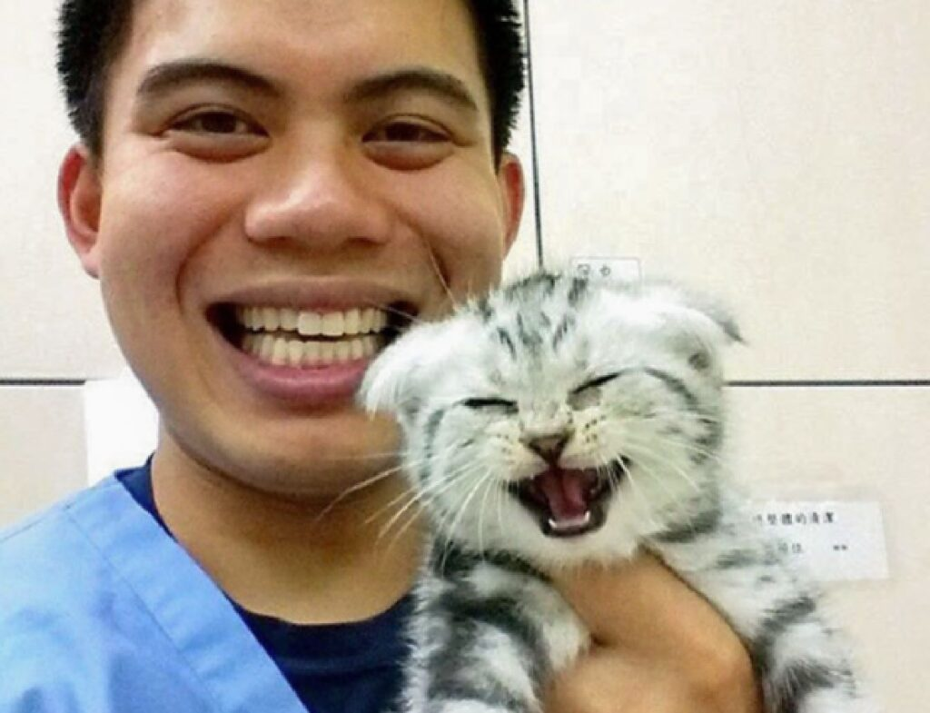 gattino sorriso splendente