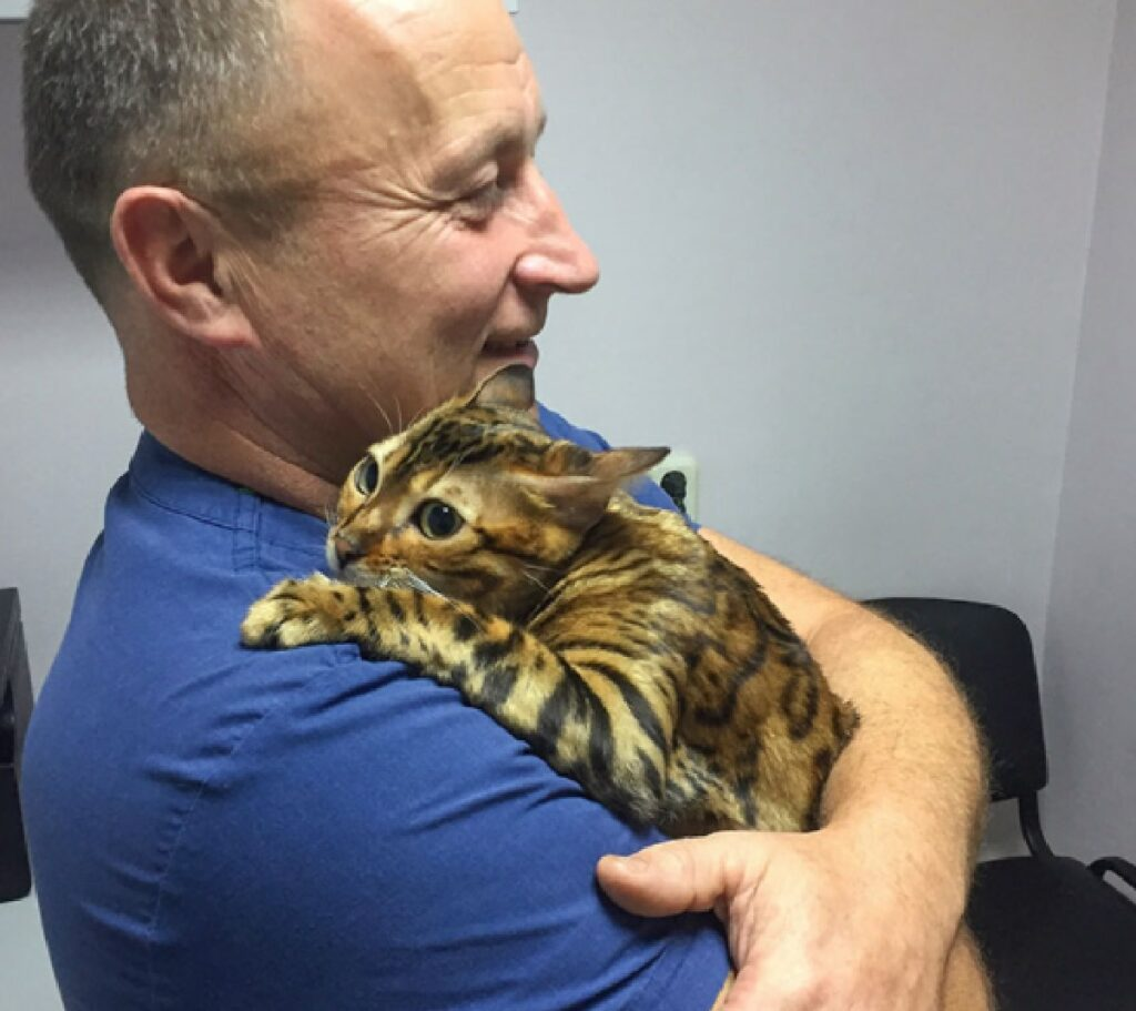 gatto bengala abbraccio