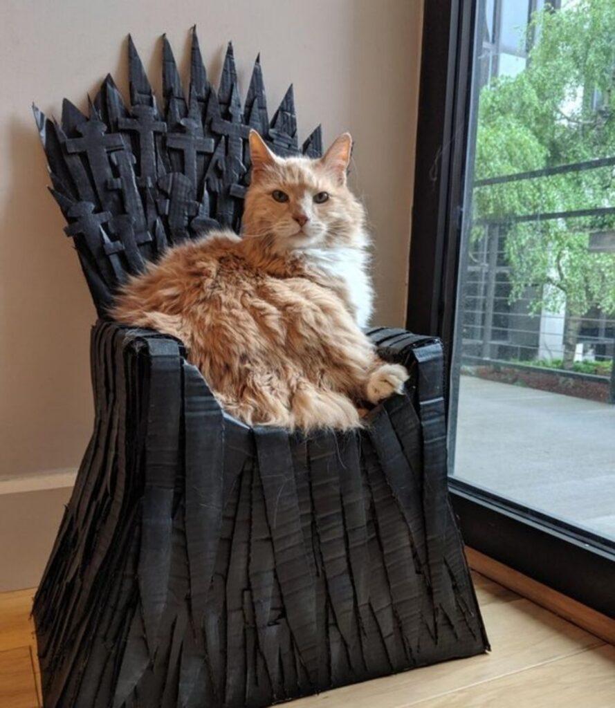 gatto trono spade