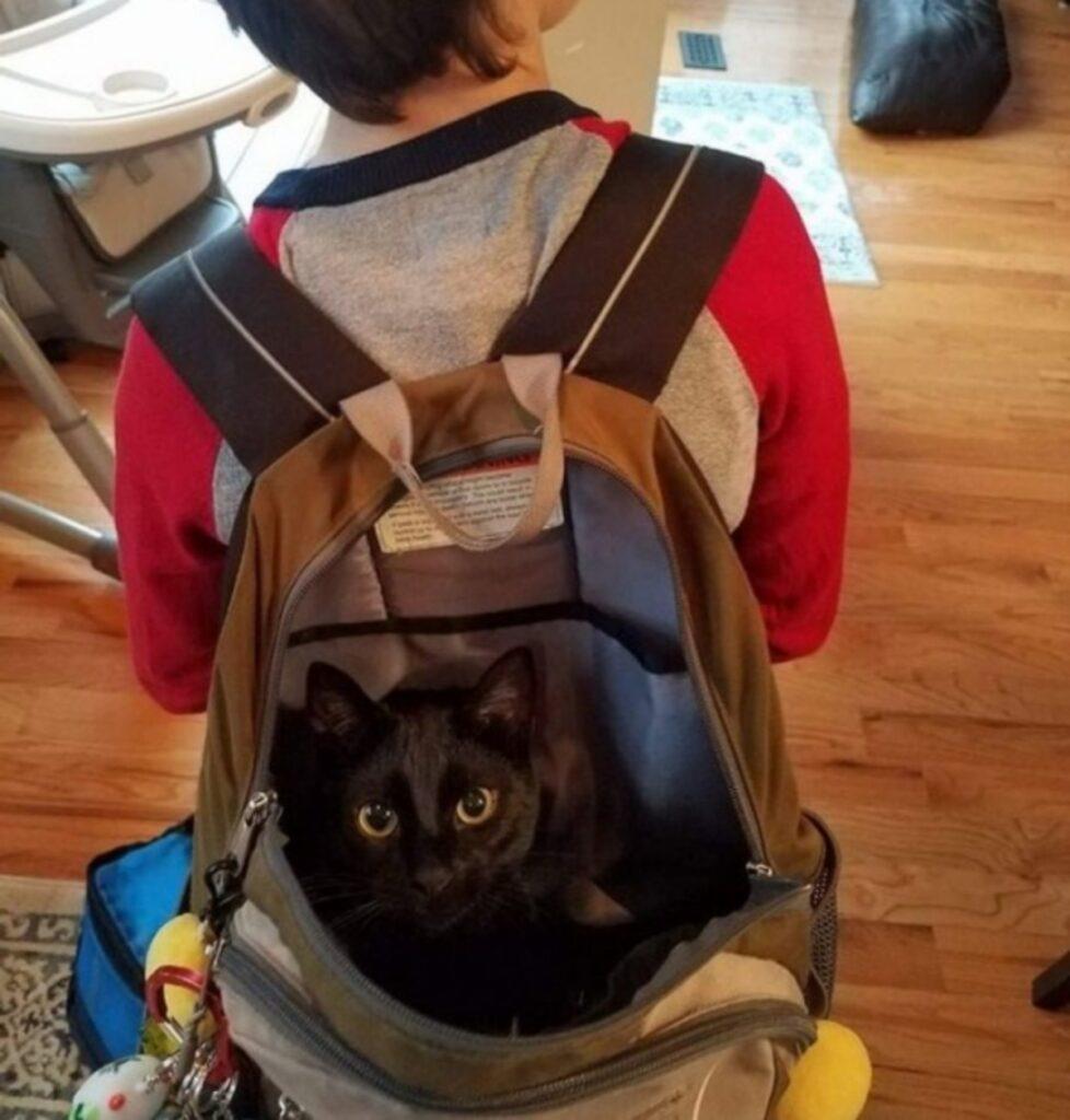 gatto zaino tenero