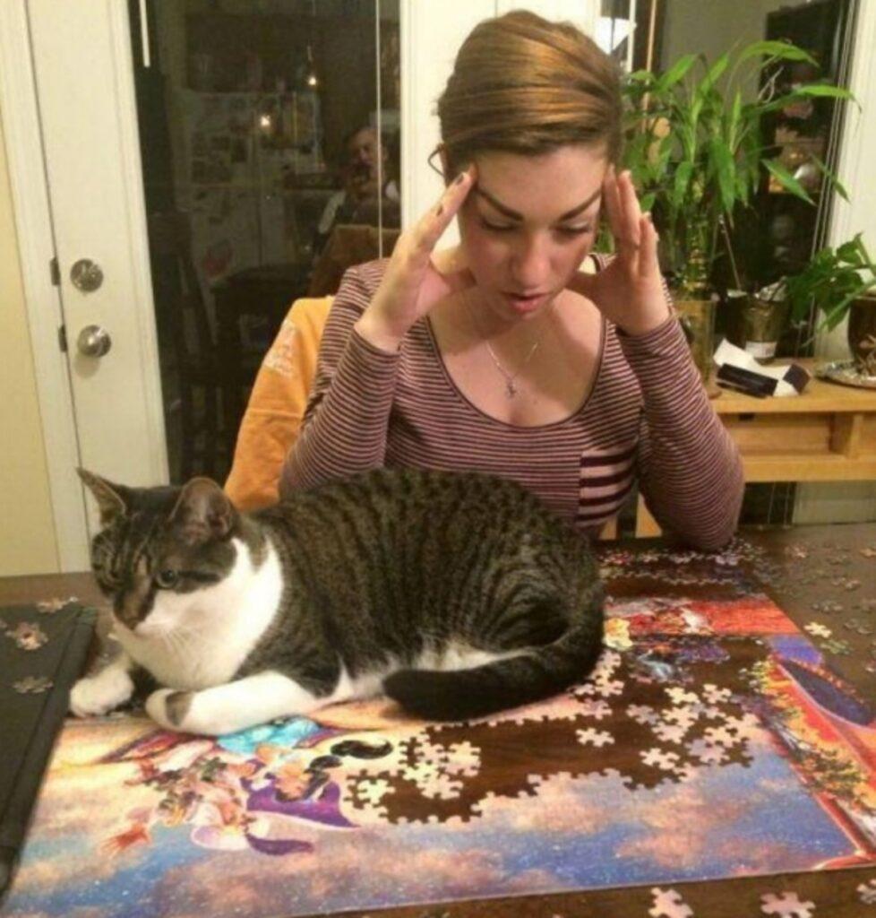 micio puzzle rovina