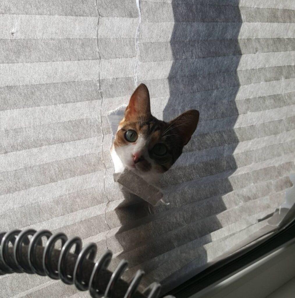 gatto carta buco