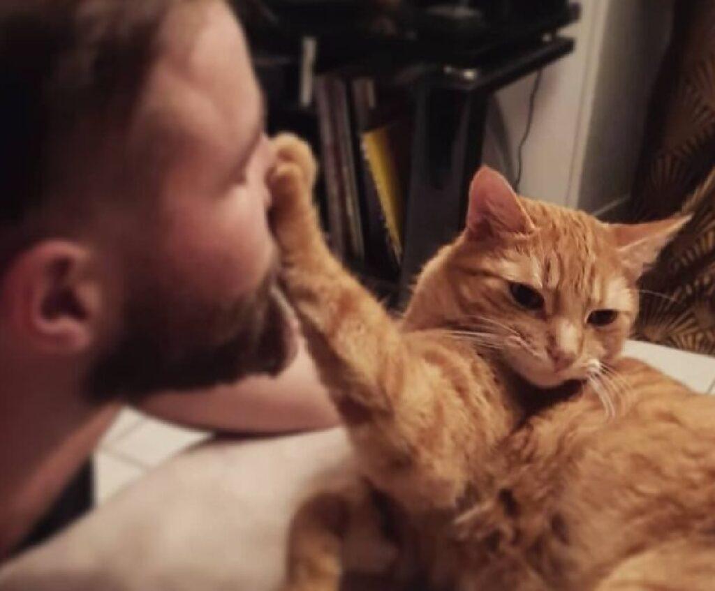 gatto rosso zampetta negazione