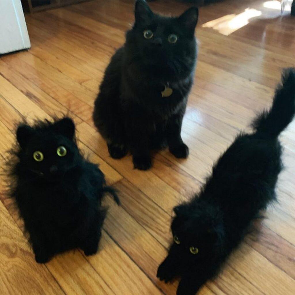 gatti neri confusione
