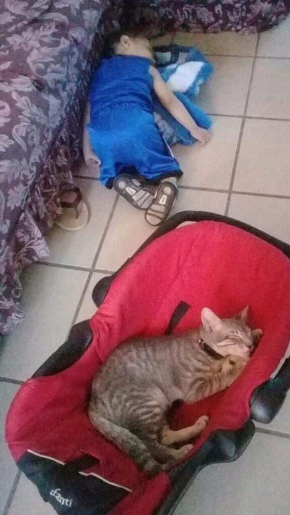 felino seggiolino dorme