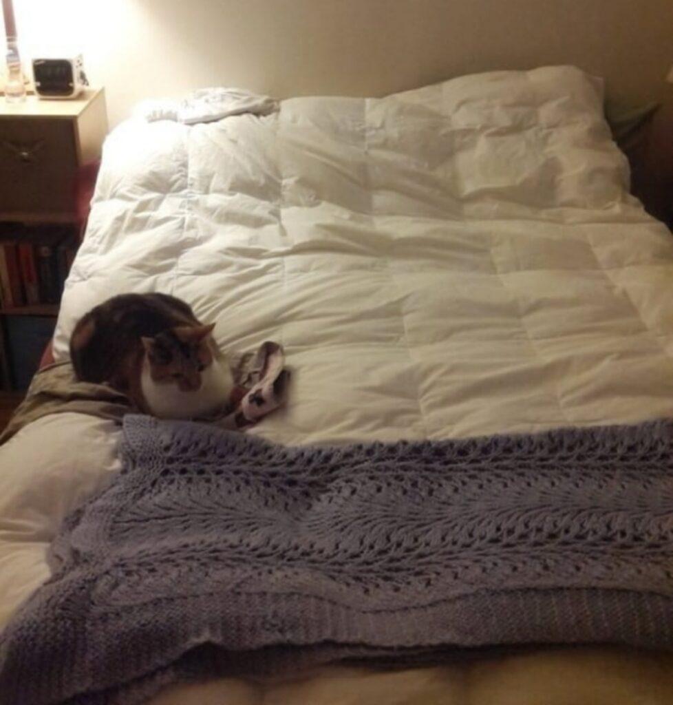 micio letto coperte