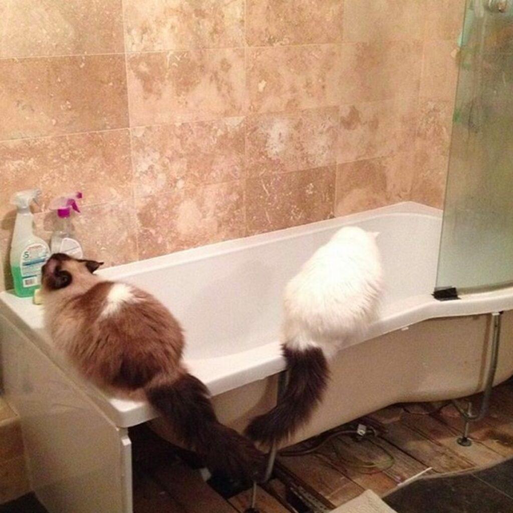gatti vasca bagno